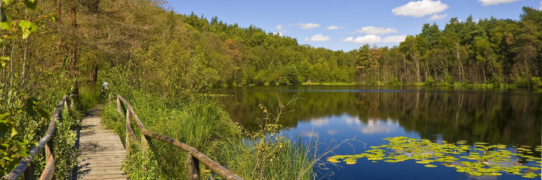 Wanderweg - Müritz-Nationalpark