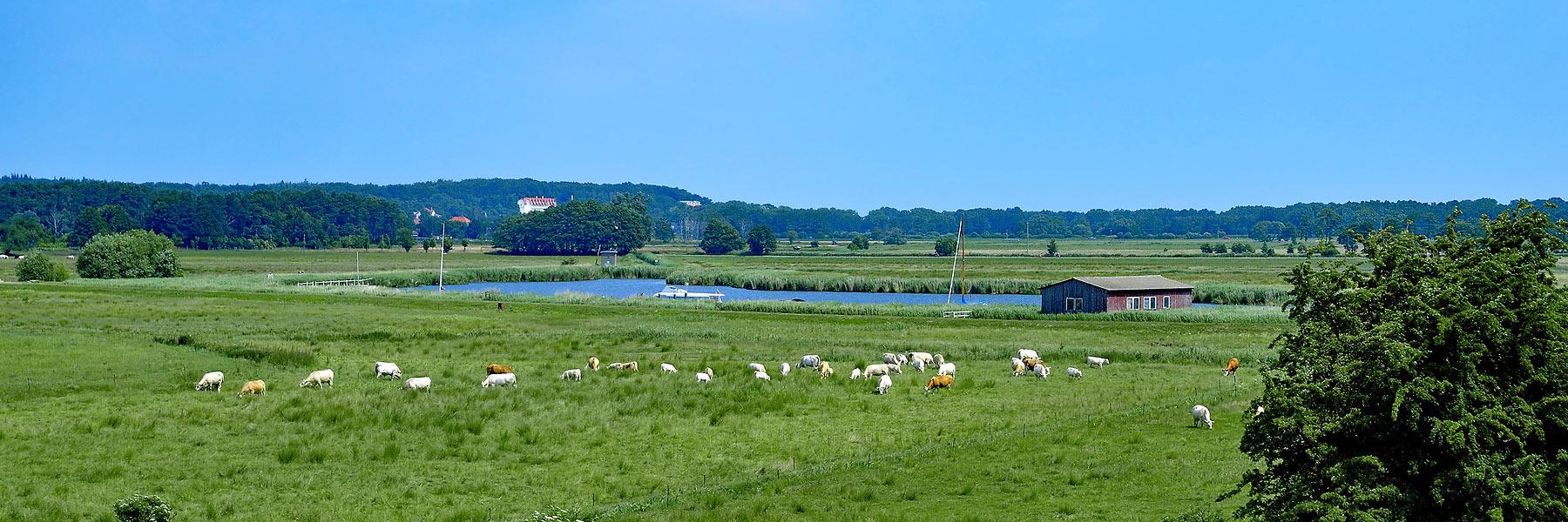 Achterwasser Bucht - Seebad Loddin-Kölpinsee