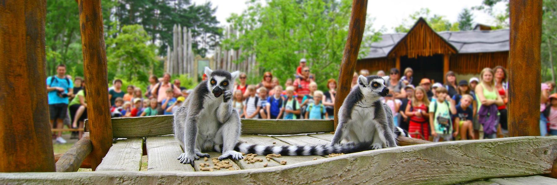 Lemuren - Vogelpark Marlow gGmbH
