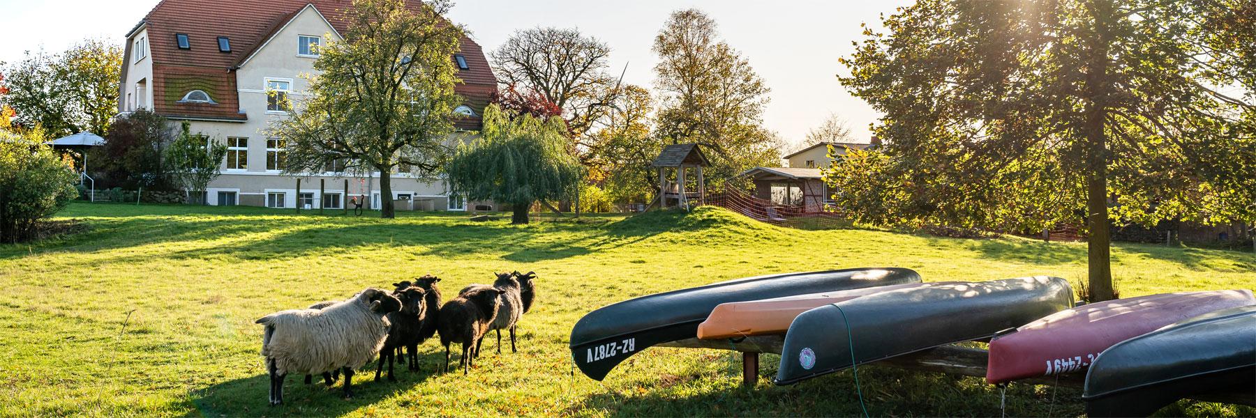 Schafe - Gutshaus Barkow
