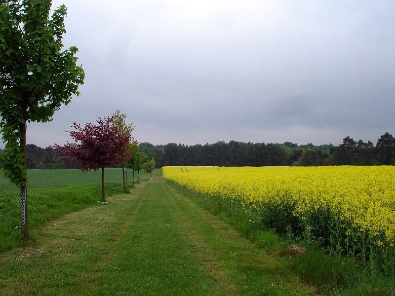 Radweg im Schweriner Seengebiet