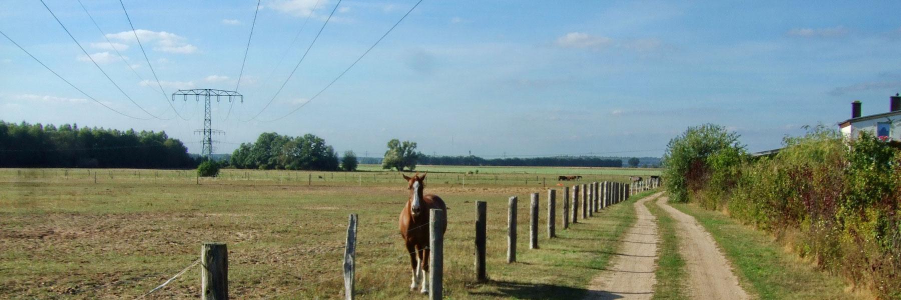 Pferdekoppel - Reiterhof Mietz
