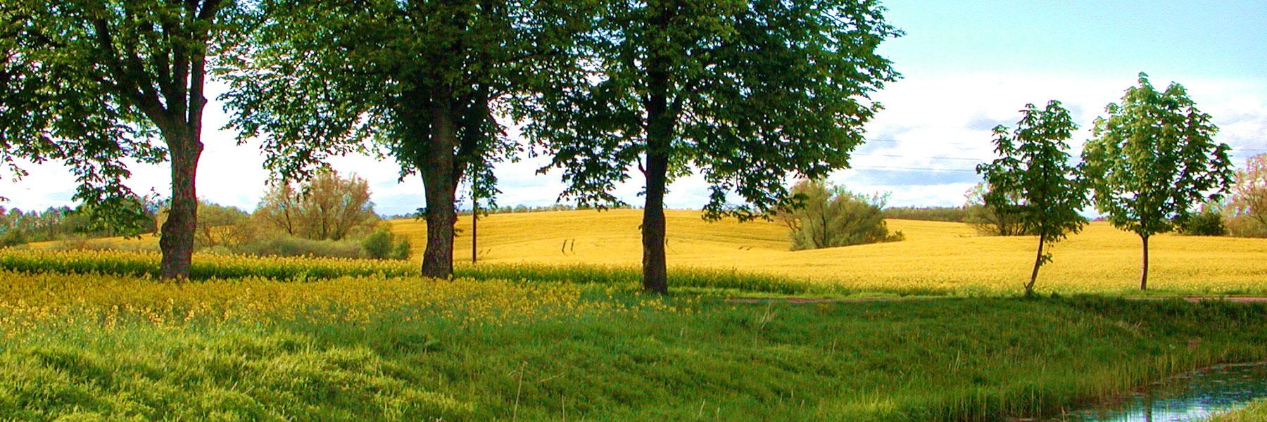Landschaft - KIWI Ferienwohnungen am Dreier See