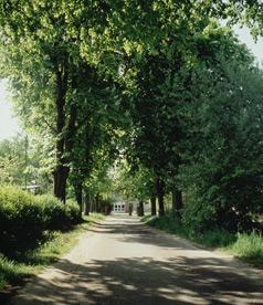 Allestraße