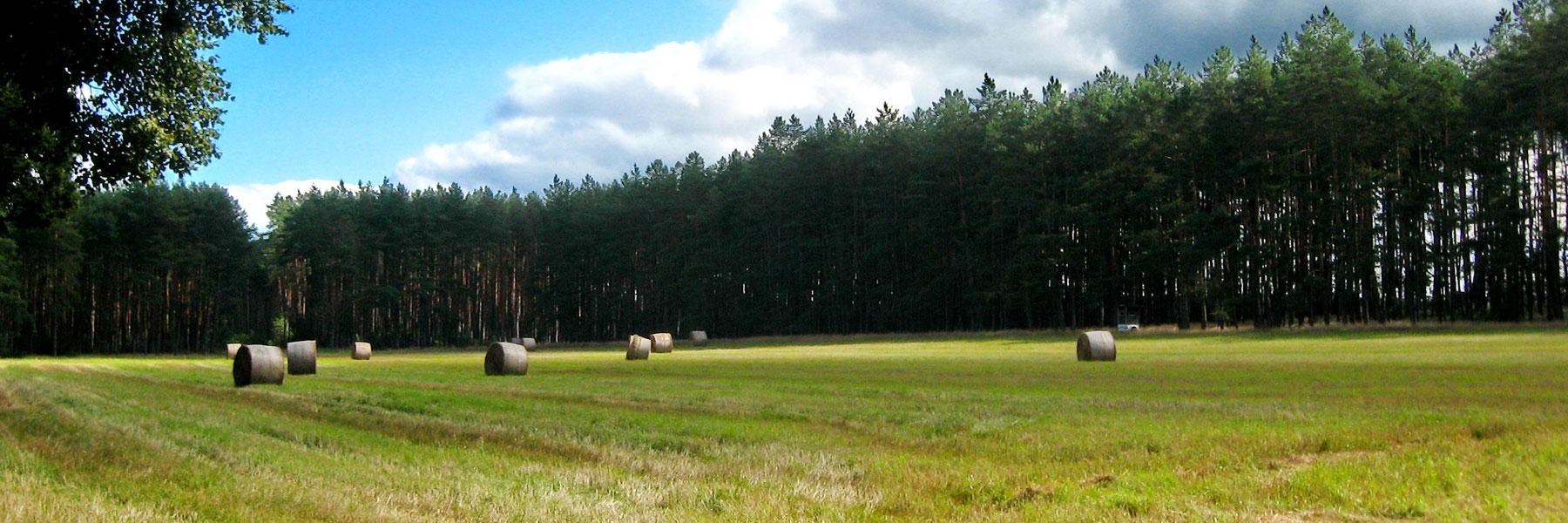 Landschaft - Ferienhof Dinse