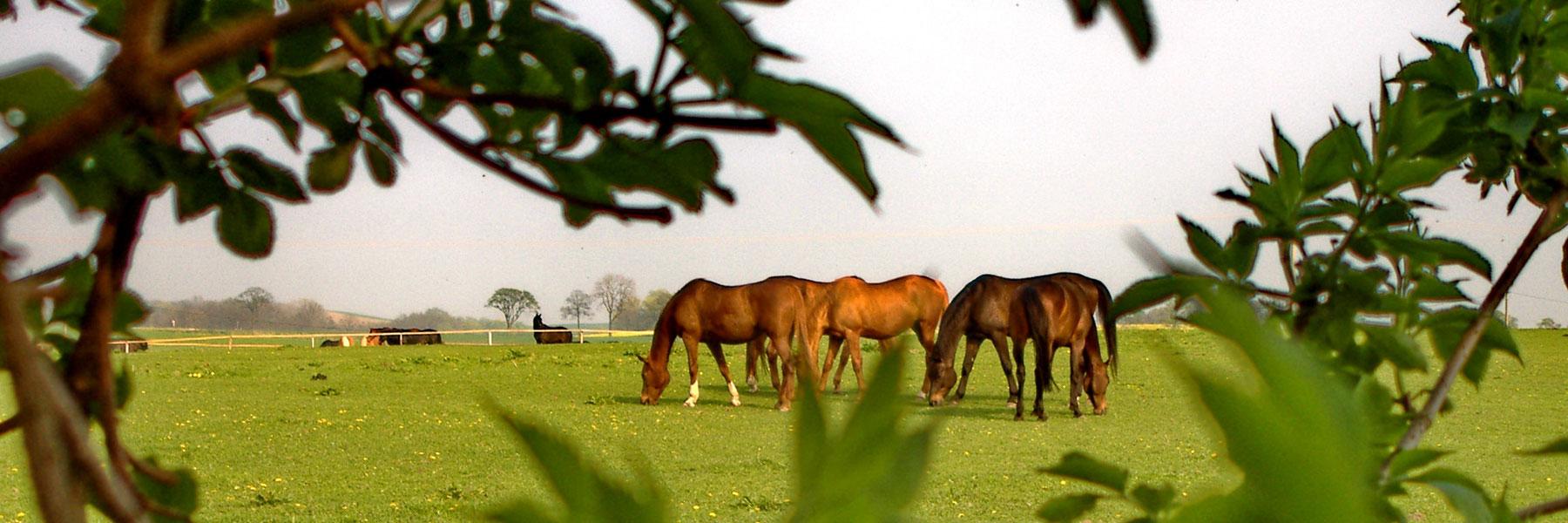 Pferdewiese - Landgut Lischow