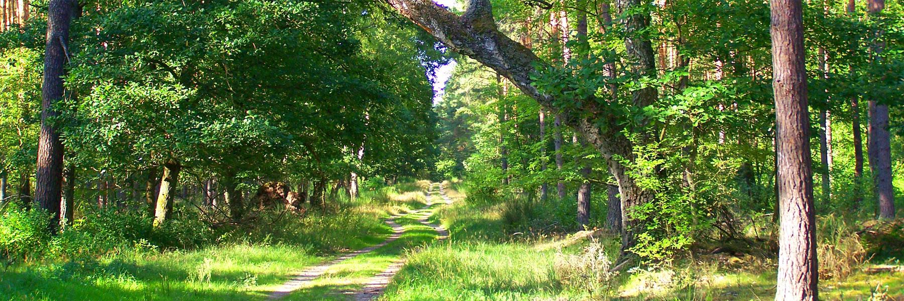 Wald - Ferienwohnungen Juhnke