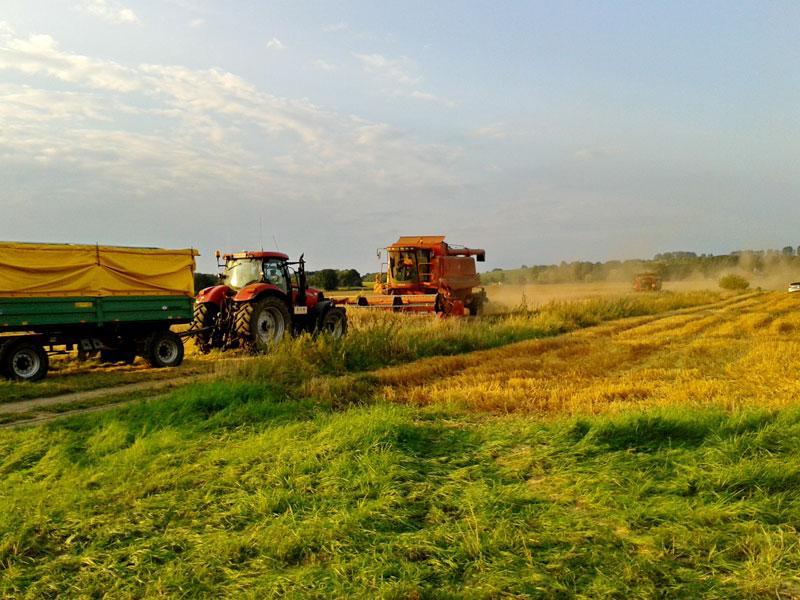 Getreideernte im Sommer