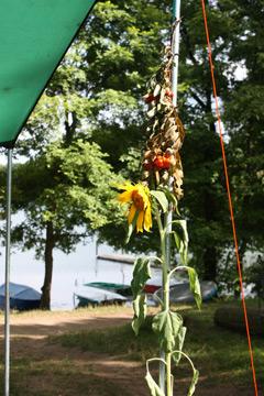 Detail auf dem Campingplatz
