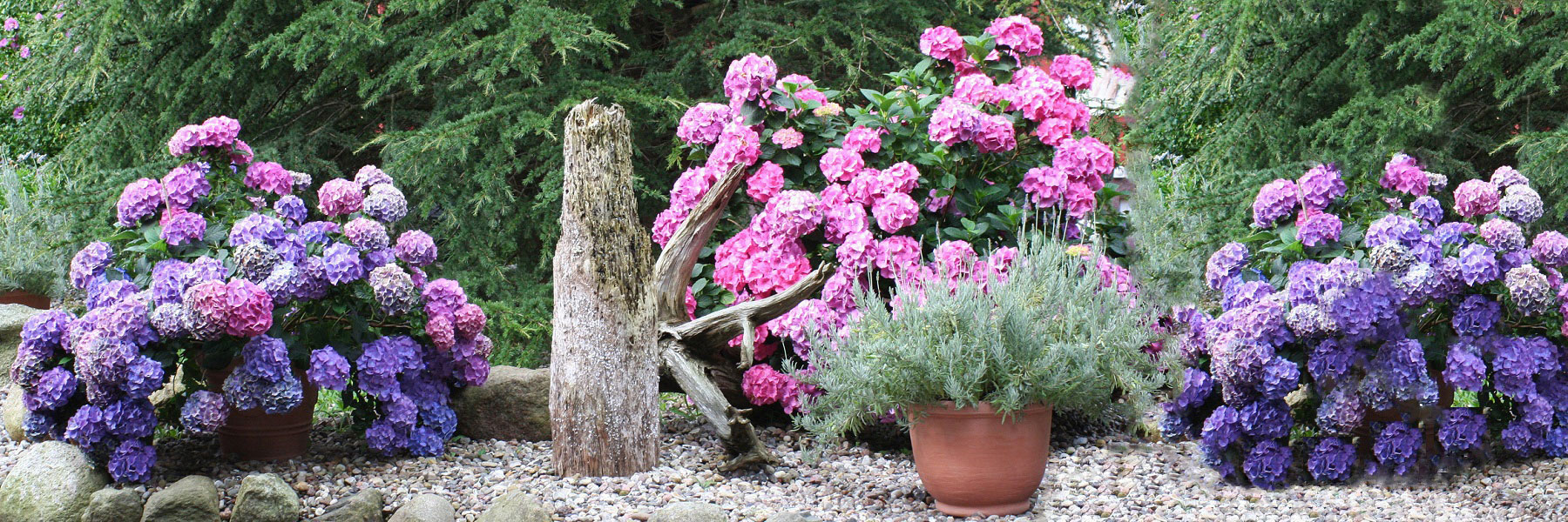 Blumen - Natur-Schatzkammer Neuheide
