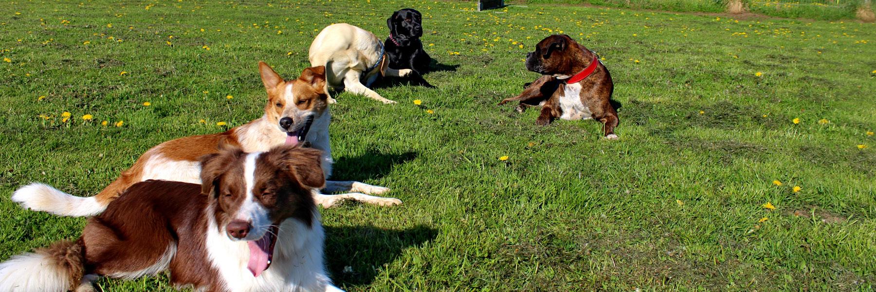 Hunde - Tierpension Tannenberg