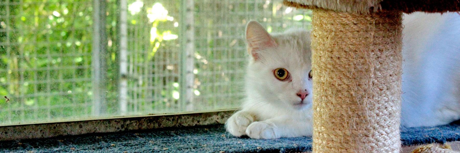 Katze - Tierpension Tannenberg
