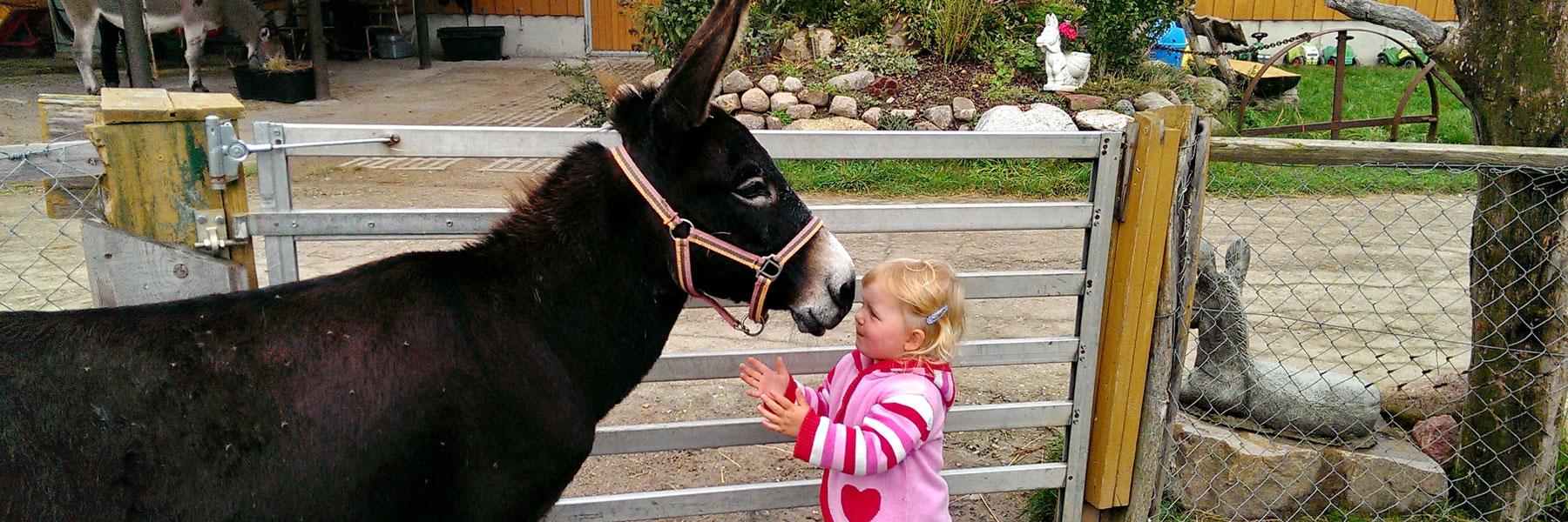 Esel und Kind - Eselhof I-AAH Klockenhagen