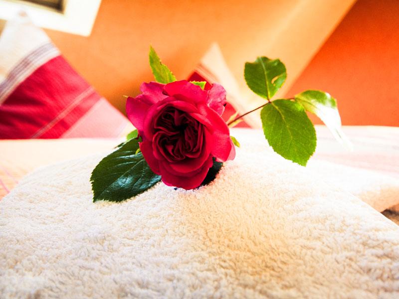 Rose auf einem Doppelbett